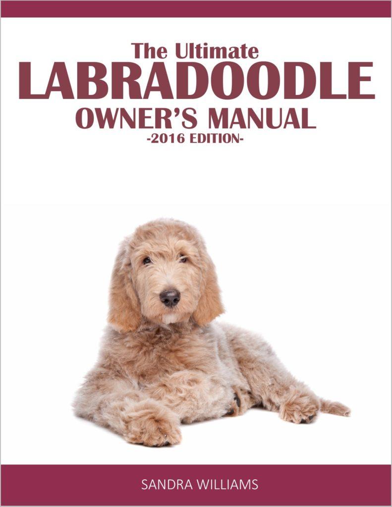 Goldendoodle Size Information | Everything Doodle